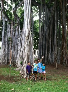 Hawaiian trees